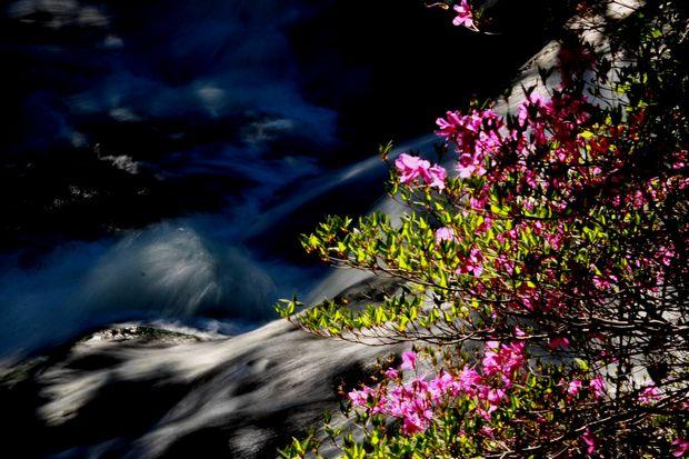 29,6,3 竜頭の滝のミツバツツ1-7'b.jpg