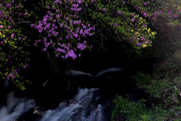 29,6,3 竜頭の滝のミツバツツ1-9b.jpg