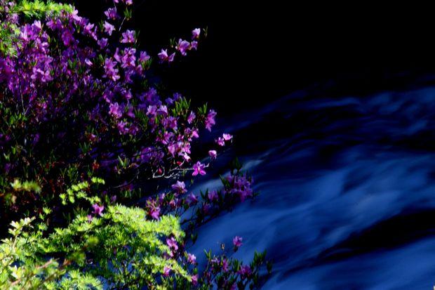 29,6,3 竜頭の滝のミツバツツ3-2b.jpg
