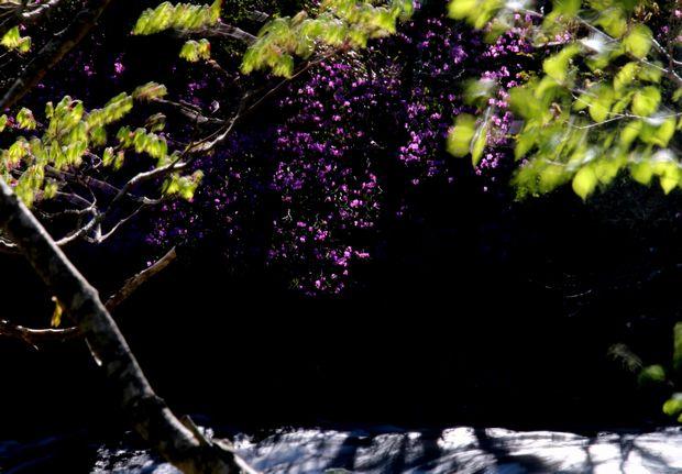 29,6,3 竜頭の滝のミツバツツ3-8b.jpg