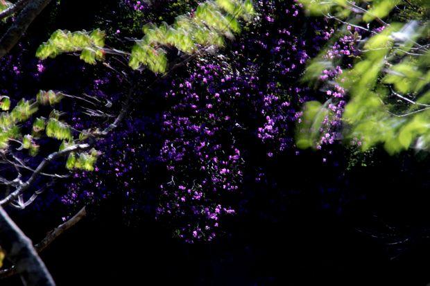 29,6,3 竜頭の滝のミツバツツ3-9b.jpg