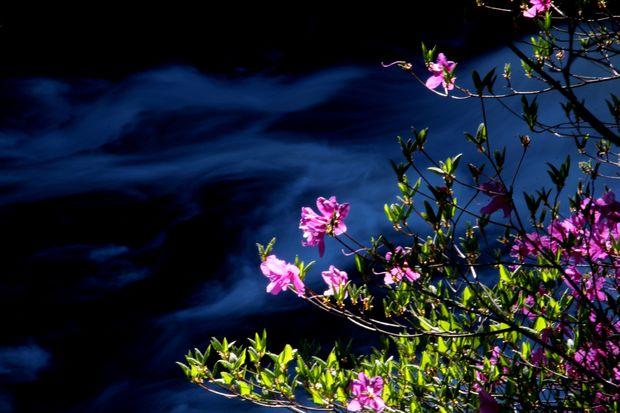 29,6,3 竜頭の滝のミツバツツ5-5b.jpg