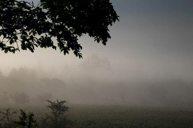29,7,8 小田代原の日の出と霧2-1b.jpg