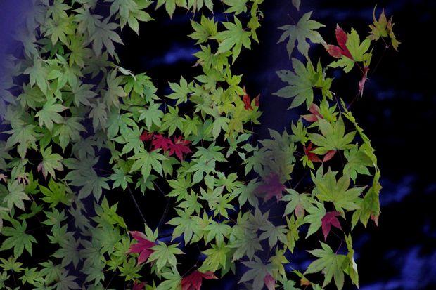 29,9,24竜頭の滝と紅葉1-9b.jpg