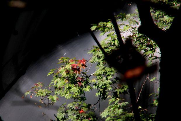 29,9,24竜頭の滝と紅葉3-2b.jpg