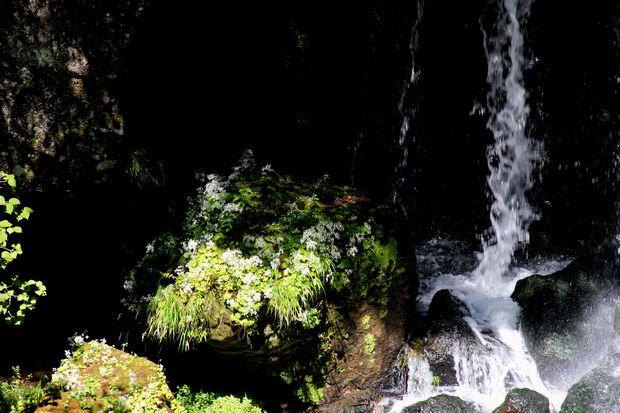 29,9,24竜頭の滝のシロヨメナ1-5b.jpg