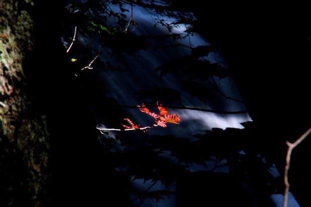 29,9,9竜頭の滝の紅葉1-6b.jpg