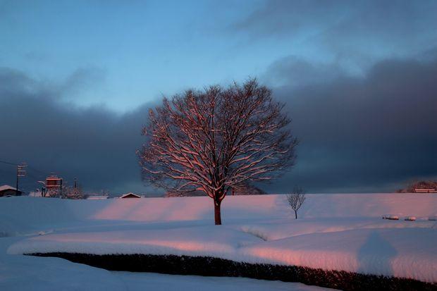 30,1,23大雪の朝雪華の朝焼け2-1b.jpg