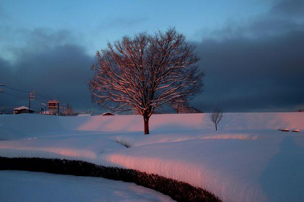 30,1,23大雪の朝雪華の朝焼け2-3b.jpg