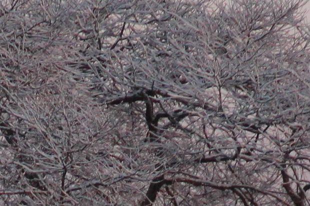 30,1,30冬の枝垂れ桜1-2''b.jpg