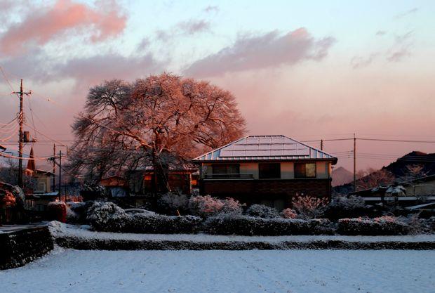 30,1,30冬の枝垂れ桜1-5b.jpg