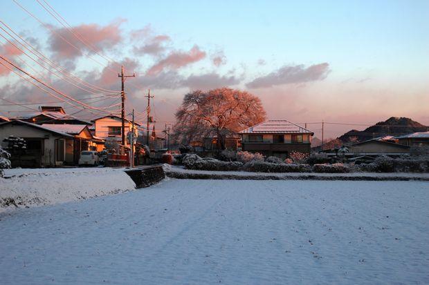30,1,30冬の枝垂れ桜1-7b.jpg