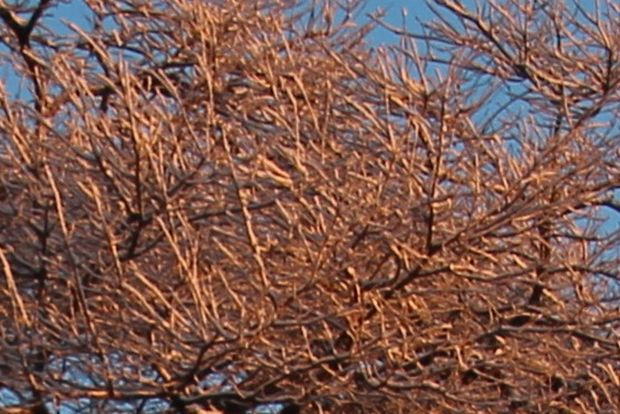 30,1,30冬の枝垂れ桜1-9'b.jpg