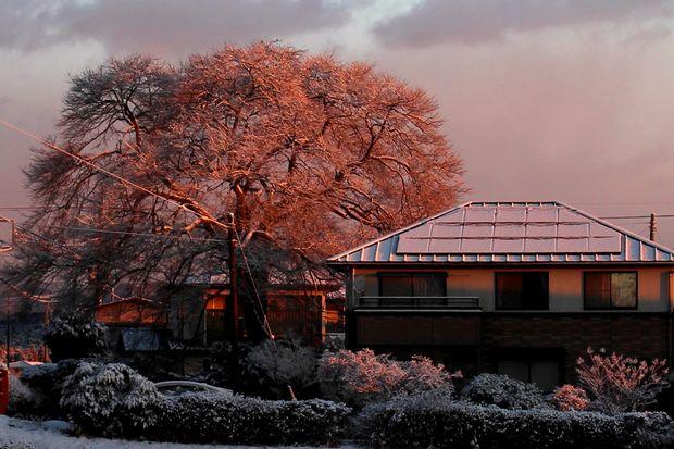 30,1,30冬の枝垂れ桜1-9b.jpg