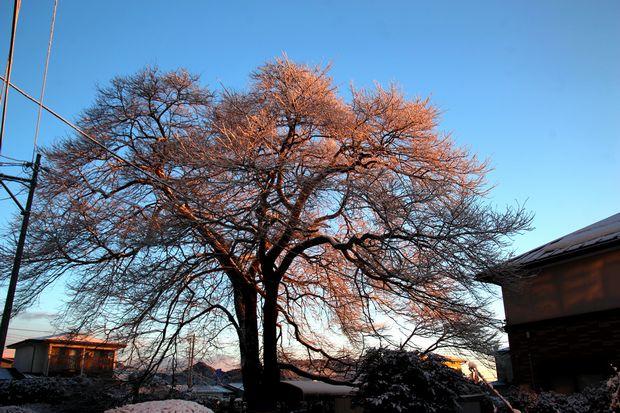 30,1,30冬の枝垂れ桜2-9b.jpg
