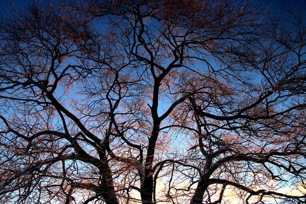 30,1,30冬の枝垂れ桜3-2b.jpg