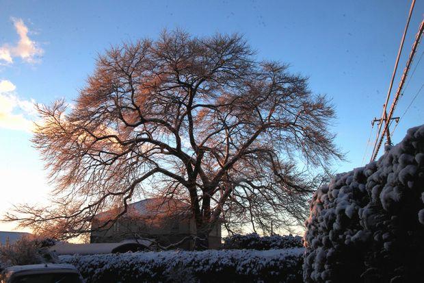 30,1,30冬の枝垂れ桜3-3b.jpg