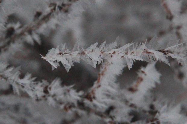 30,1,8光徳沼の霧氷1-4b.jpg