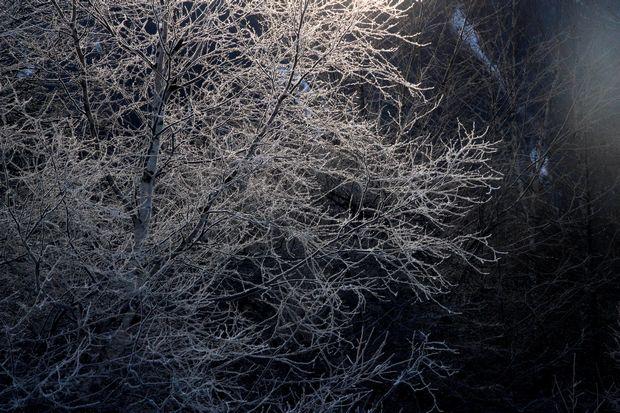 30,1,8光徳沼の霧氷3-2b.jpg