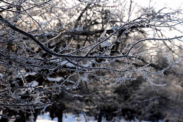 30,1,8光徳沼の霧氷3-6b.jpg