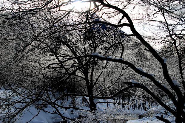 30,1,8光徳沼の霧氷4-3b.jpg