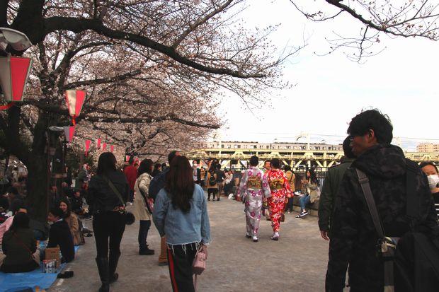 30,3,24隅田公園の桜1-4b.jpg