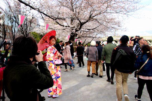 30,3,24隅田公園の桜1-6b.jpg