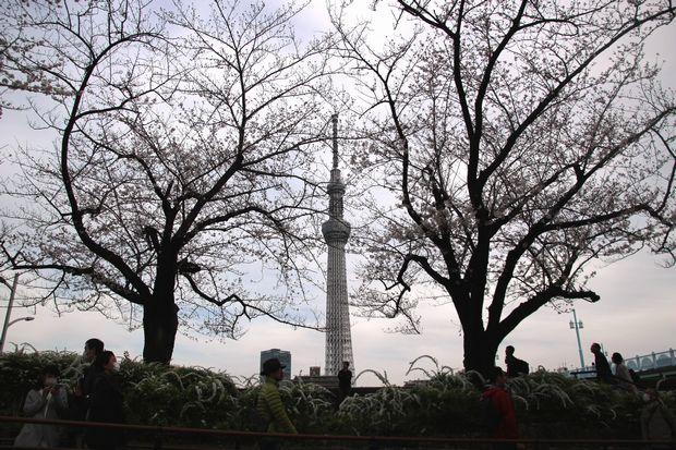30,3,24隅田公園の桜2-1b.jpg
