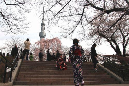 30,3,24隅田公園の桜2-8b.jpg