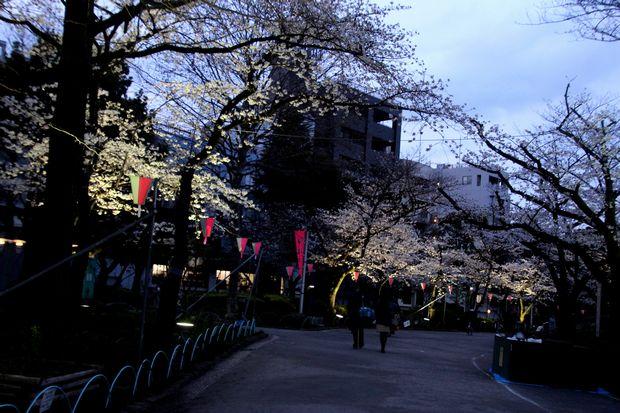 30,3,24隅田公園の桜5-7b.jpg