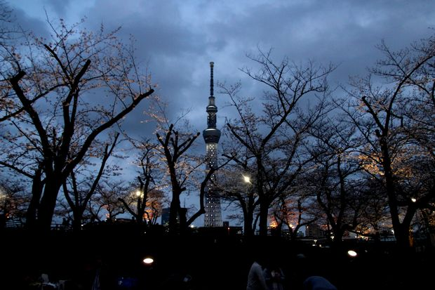 30,3,24隅田公園の桜6-1b.jpg