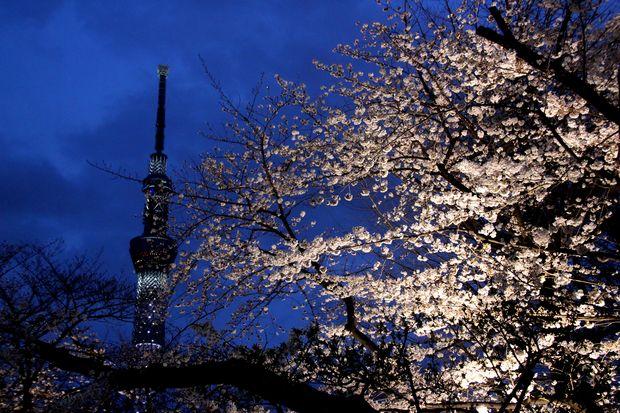 30,3,24隅田公園の桜6-6b.jpg