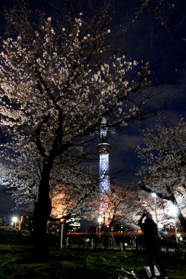 30,3,24隅田公園の桜7-4b.jpg