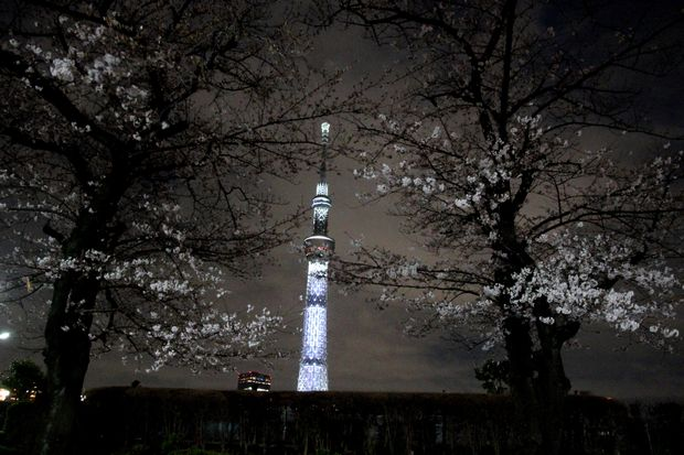 30,3,24隅田公園の桜7-9b.jpg