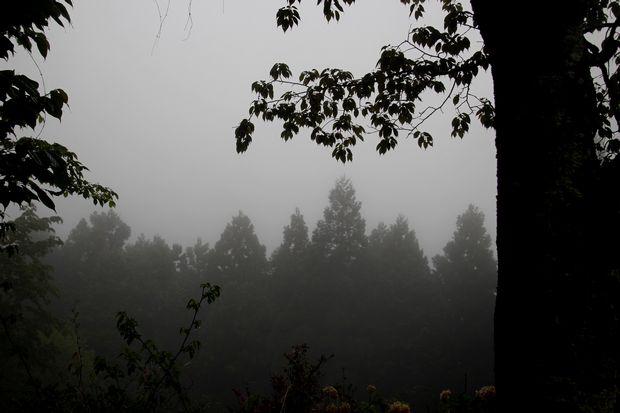 30,4,24霧の古刹2-2b.jpg