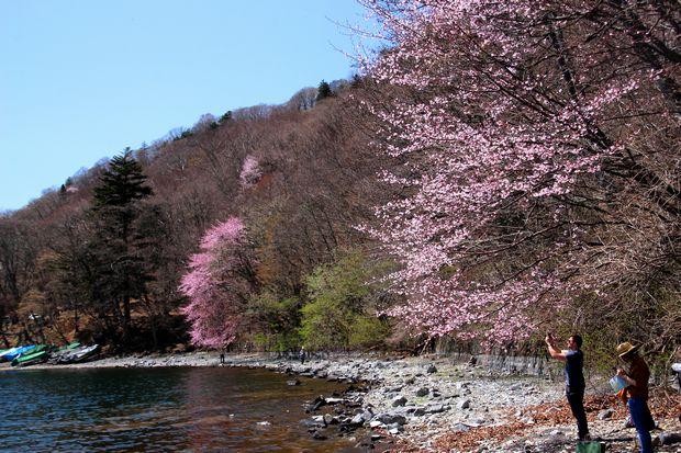 30,4,28 中禅寺湖の桜1-2b.jpg