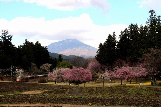 30,4,8 連山、桜、スペーシア1-7'b.jpg