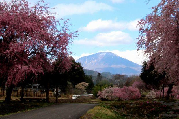 30,4,8 連山、桜、スペーシア2-7'b.jpg