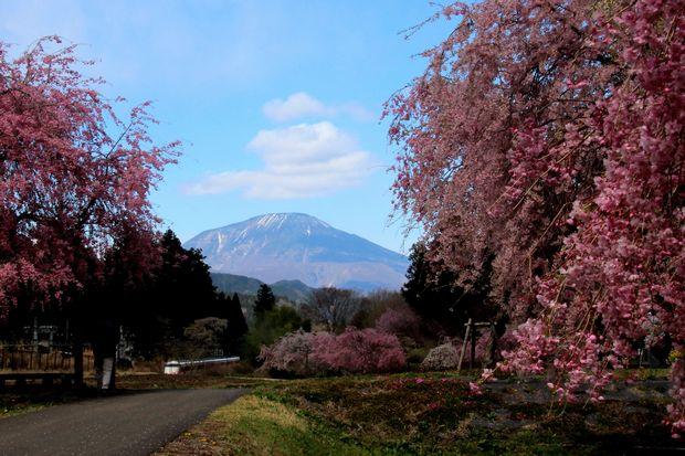 30,4,8 連山、桜、スペーシア2-9'b笠雲.jpg