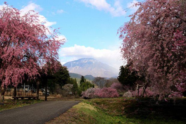 30,4,8 連山と桜3-1b.jpg