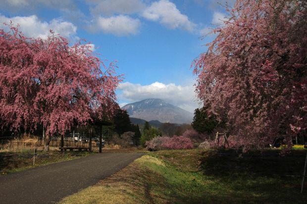 30,4,8 連山と桜3-3b.jpg