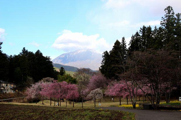 30,4,8 連山と桜3-7b.jpg
