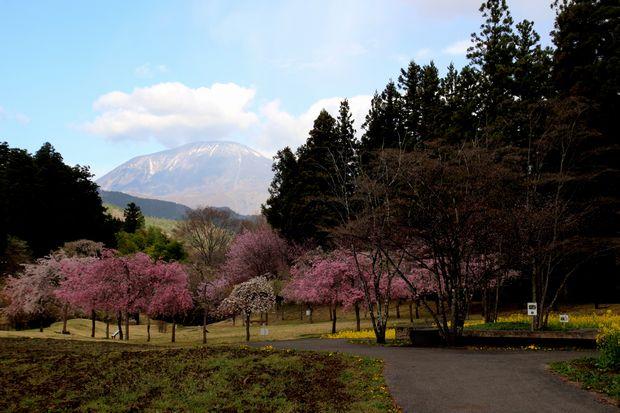 30,4,8 連山と桜3-9b.jpg