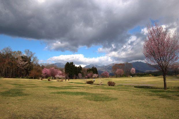 30,4,8 連山と桜5-8b.jpg