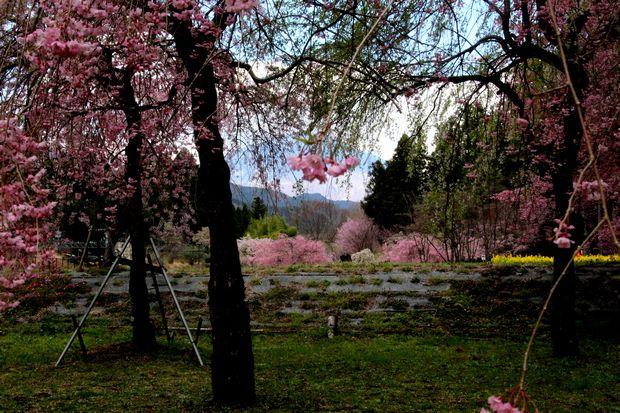 30,4,8 連山と桜6-3b.jpg