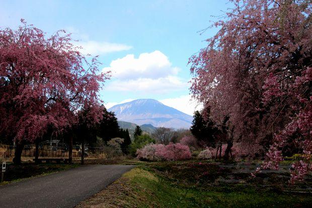 30,4,8 連山と桜6-9b.jpg