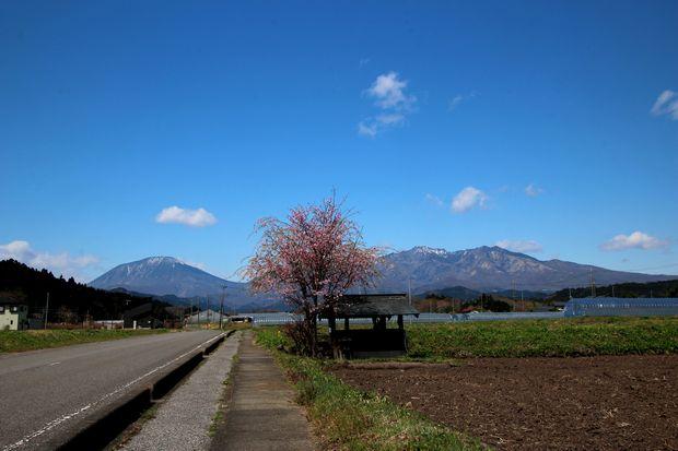 30,4,8 連山と桜8-4b.jpg