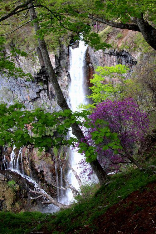 30,5,12華厳の滝とツツジ1-7'b.jpg