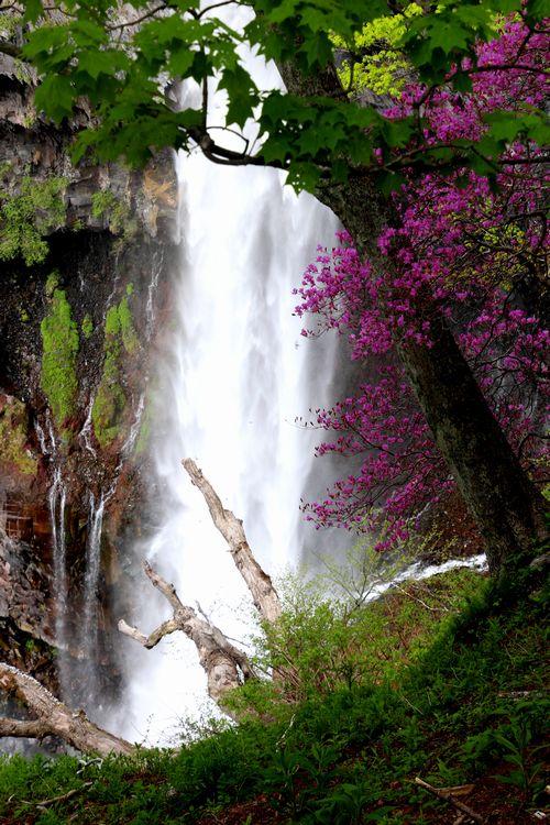 30,5,12華厳の滝とツツジ4-7b.jpg