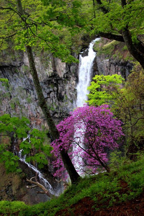 30,5,13 華厳の滝とツツジ1-5b.jpg